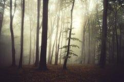 Luz mágica na floresta misteriosa do outono com névoa Foto de Stock Royalty Free