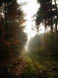 Luz mística en bosque Imágenes de archivo libres de regalías