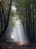 Luz mística en bosque Foto de archivo libre de regalías