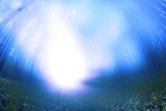 Luz místico em uma floresta fotografia de stock