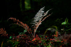 Samambaia mágica na floresta Imagens de Stock Royalty Free