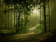 Luz madura de s Imagen de archivo libre de regalías