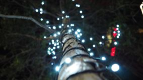 Luz na árvore Imagem de Stock Royalty Free