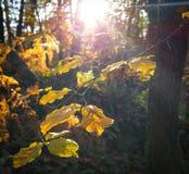 Luz na floresta imagem de stock