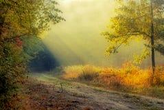 Luz na floresta Fotografia de Stock