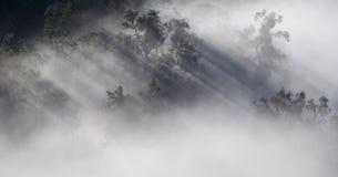 Luz na névoa Foto de Stock