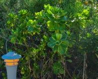 Luz na vegetação verde Imagens de Stock Royalty Free