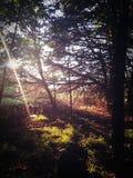 Luz nas madeiras Foto de Stock