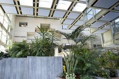 Luz natural del eco de los interiores verdes del edificio de oficinas Fotos de archivo