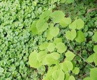 Luz nova - folhas verdes da mola Imagens de Stock Royalty Free