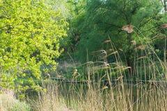 Luz nova - folhas verdes da mola Fotos de Stock