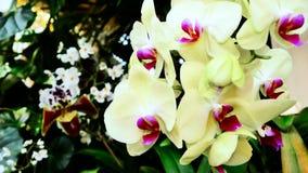 Luz - orquídea amarela filme