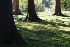 Luz otoñal de la mañana en un bosque Imagen de archivo
