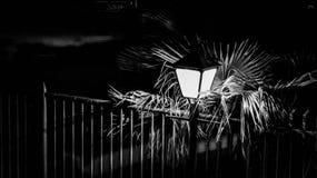 Luz pública con rejilla y la palmera fotos de archivo libres de regalías