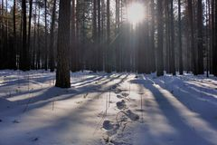 A luz passa através dos ramos das árvores Foto de Stock Royalty Free