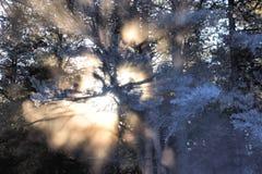 A luz passa através dos ramos das árvores Imagens de Stock Royalty Free