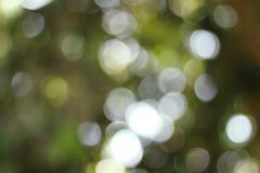 Luz que brilla en las hojas del árbol Fotos de archivo libres de regalías