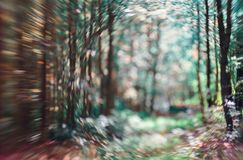 Luz que brilla en las hojas del árbol Fondo reservado del extracto de la falta de definición El verde deja el fondo de Bokeh del  imágenes de archivo libres de regalías