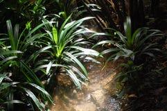 Luz que oscila en la selva Foto de archivo