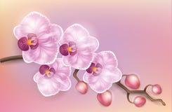 Luz realística - orquídea elegante do vintage roxo em um fundo claro Foto de Stock Royalty Free