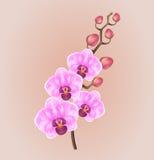 Luz realística - orquídea elegante do vintage roxo em um fundo claro ilustração do vetor