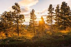 Luz reflejada de los rayos solares a través de los árboles Foto de archivo