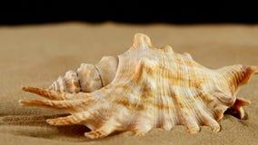 Luz - shell marrons do mar com areia e luz traseira video estoque