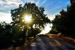 Luz solar atrás da árvore no forset imagens de stock