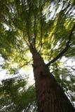 Luz solar através da árvore borrada Imagem de Stock Royalty Free