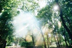 Luz solar através da coroa das árvores Fotos de Stock