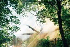 Luz solar através da coroa das árvores Foto de Stock Royalty Free