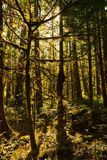 Luz solar através da floresta densa que cerca o centro norte do visitante das cascatas fotografia de stock royalty free