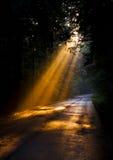 Luz solar através das árvores Fotografia de Stock