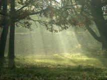 Luz solar através das árvores Fotografia de Stock Royalty Free