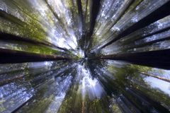 Luz solar através das copas de árvore Fotografia de Stock Royalty Free