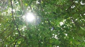 Luz solar através das folhas Imagens de Stock Royalty Free