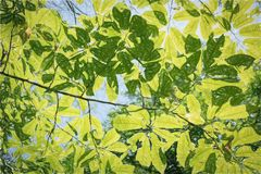 Luz solar através das folhas verdes r fotos de stock royalty free