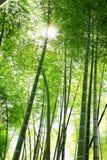 Luz solar através dos bambus imagem de stock