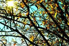 Luz solar através dos ramos de árvore Fotografia de Stock Royalty Free