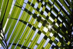 Luz solar Backlit entre as folhas Imagens de Stock Royalty Free