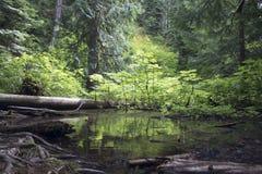 A luz solar bate o bosque Fotos de Stock Royalty Free