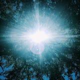 Luz solar bonita através das árvores Fotos de Stock Royalty Free
