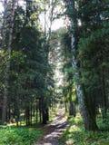 Luz solar bonita na floresta imagens de stock royalty free