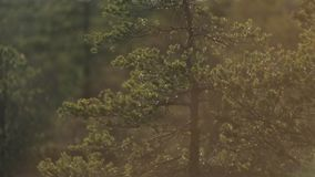 A luz solar brilha através das folhas das árvores vídeos de arquivo