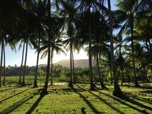Luz solar com o Palmtrees Fotografia de Stock Royalty Free