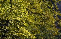Luz solar da árvore Fotos de Stock Royalty Free