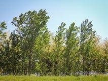 Luz solar da árvore de floresta Foto de Stock