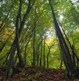Luz solar da floresta Imagem de Stock Royalty Free