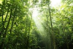 Luz solar da floresta imagens de stock royalty free
