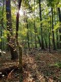 luz solar da floresta da manhã foto de stock
